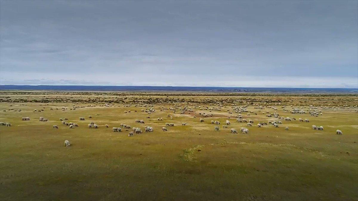 """Estancia Por Fin #Chile """"Tradición y Cultura, Patagonia"""". Por: Marca Chile Tierra del Fuego; Regíon de Magallanes  #travelbloggers #travel #Viajar #viajes #TravelBlogger #ColoresDeChile #ttot #TravelBlog #Patagonia #travelinspires"""