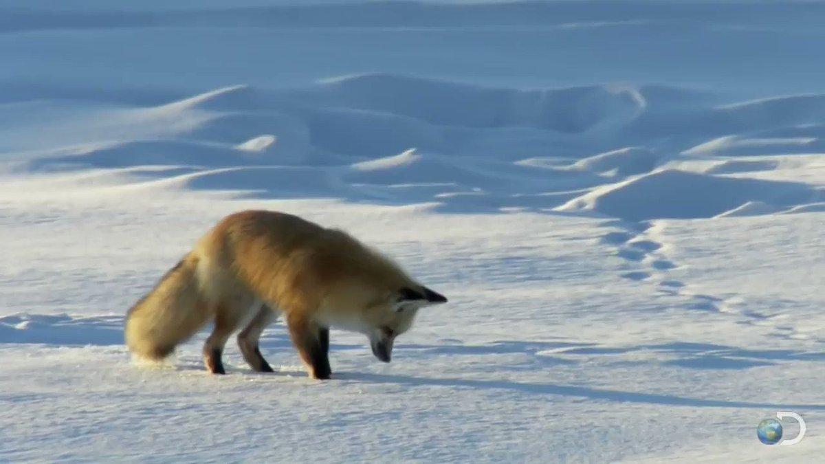 Надписью, картинки лисы анимация зимой