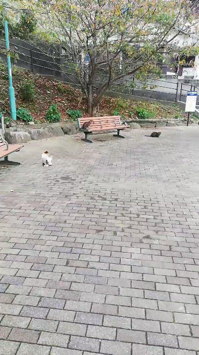 これが野良猫ってマジかよ😳