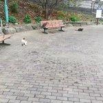 【にゃんこへの階段】大きい順に並んだ猫の親子に萌え死に注意報発令中