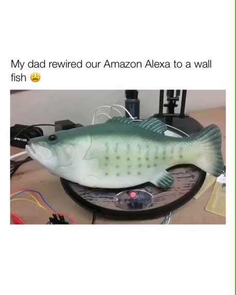 The way it's head pops at Alexa omg