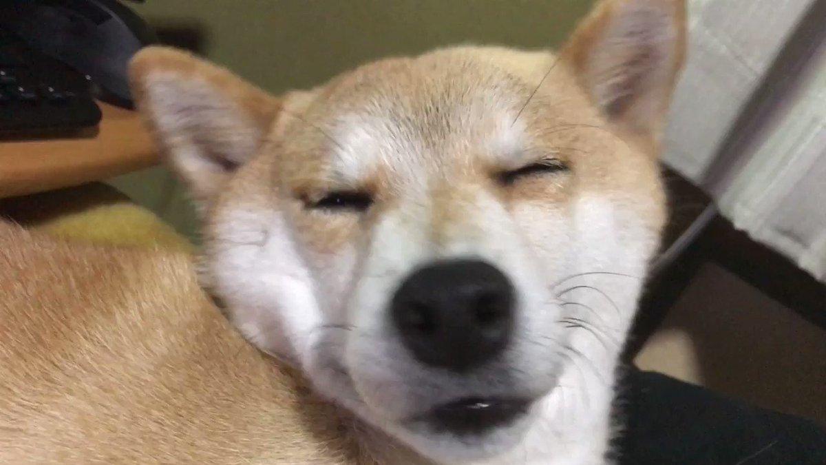RT @hanakuro_video: マッサージって犬をもこんな顔にさせるの(笑) https://t.co/qPVPzp0zjA