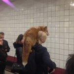 地下鉄でキツネを肩に乗せているのに周りは平然としている!