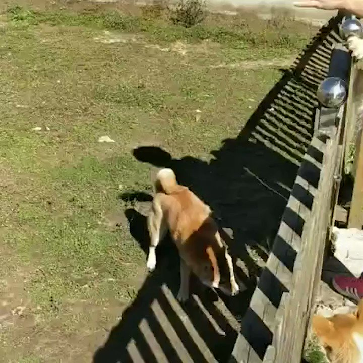 Aint no fence can stop this doge