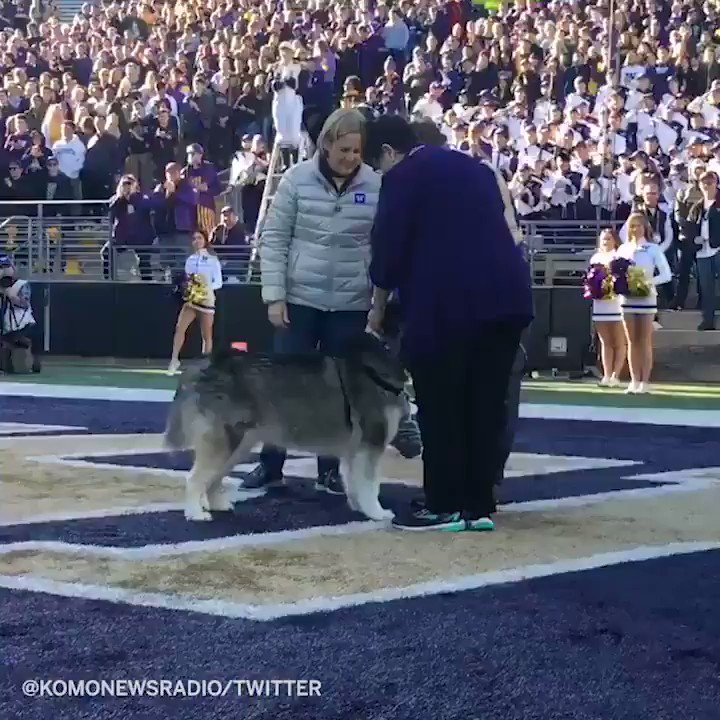UWs mascot Dubs officially passed the collar and mascot duties over to Dubs II in an adorable ceremony 🐶 (via @komonewsradio)