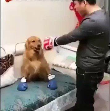 chame seu cachorro pra porrada
