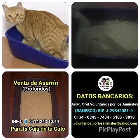 VoluntariosxAnimales's photo on Gato