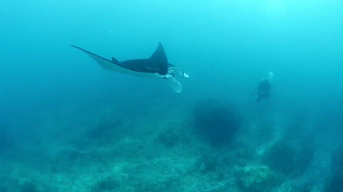 Happy weekend! 🐙🦈🐬🐳🐋🦑🐠🐟 With Gerald Keet in Nusa Penida, Indonesia 🐙🦈🐬🐳🐋🦑🐠🐟 #weekend #vibe #ocean #love #manta #ray