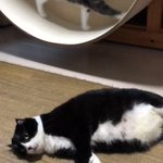 猫も人間もスタイルを維持するにはやはり運動ですね