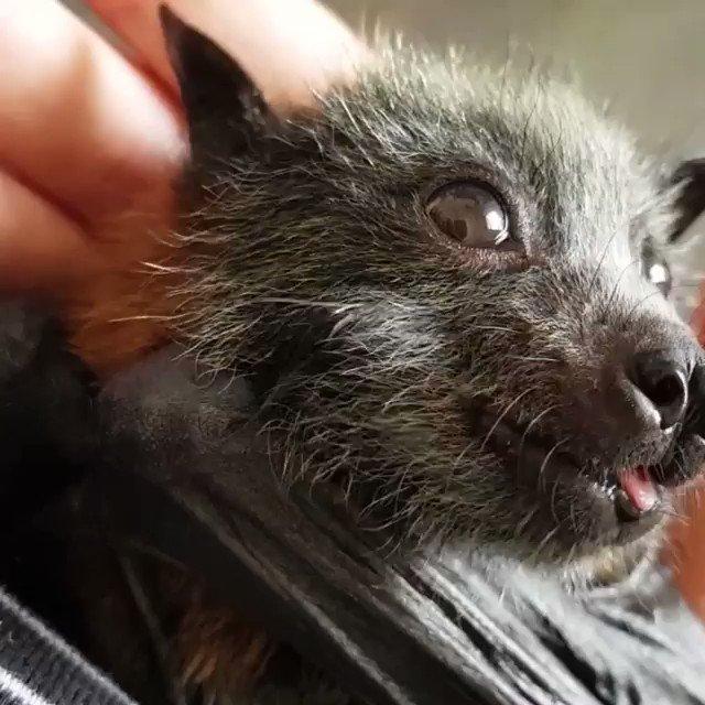 Happy Tuesday with this cute baby bat 💜  Protect #WildLife 🌏  #SlashProtectAnimals #SlashWildLife 🐾