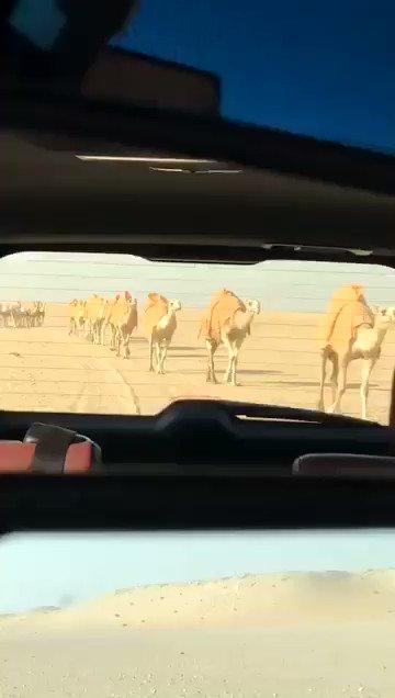 RT @sood54: #افضل_سنه_تمر_بحياتك https://t.co/lyhOeNcHBW