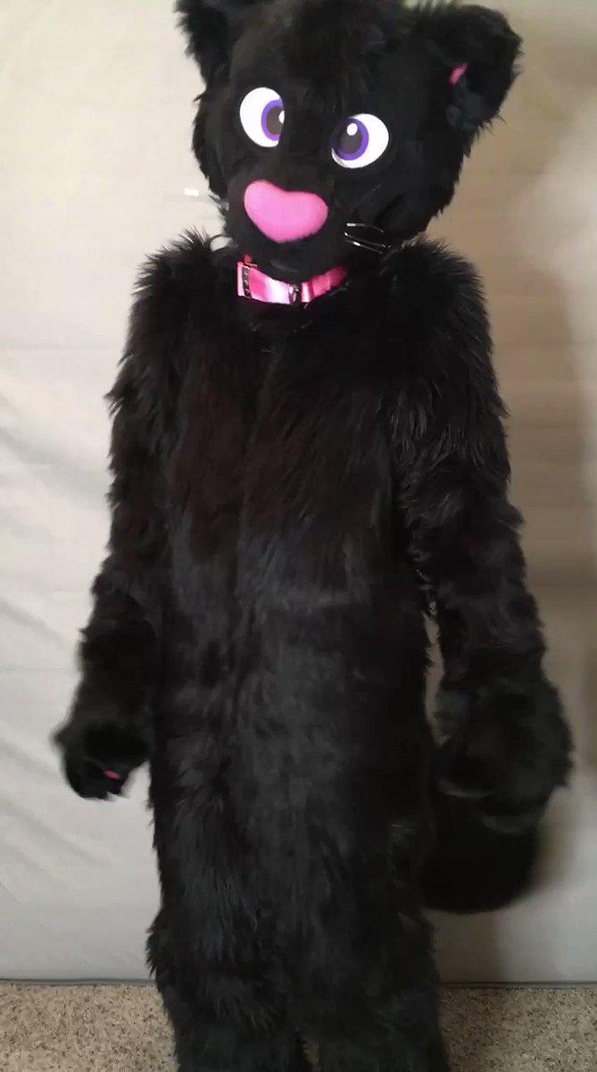 Am I cute? #SisuGIF #fursuit #cat #Caturday Any GIF suggestions? :3