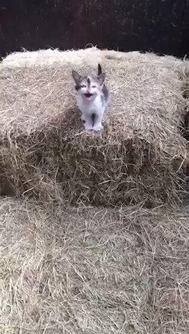 ご主人に飛びつこうとした子猫