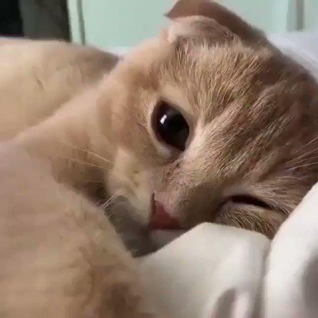 猫さんと添い寝してる気分を味わえる動画をどうぞ