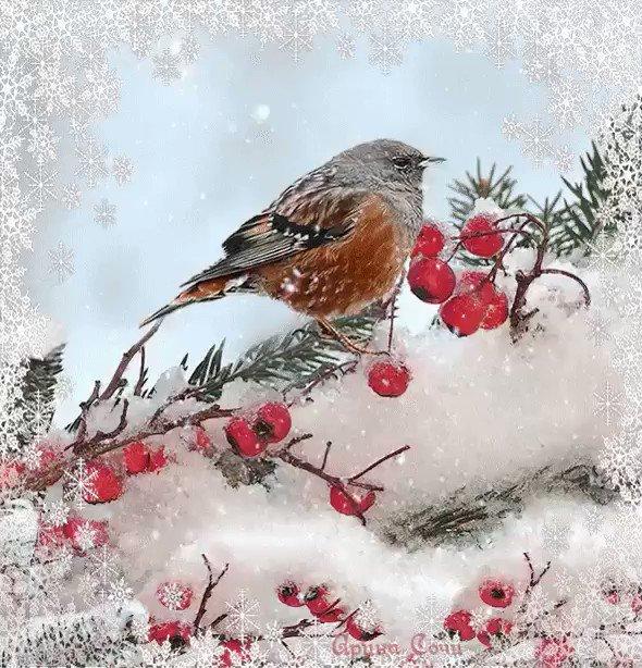 Открытка с птицами прекрасного зимнего настроения