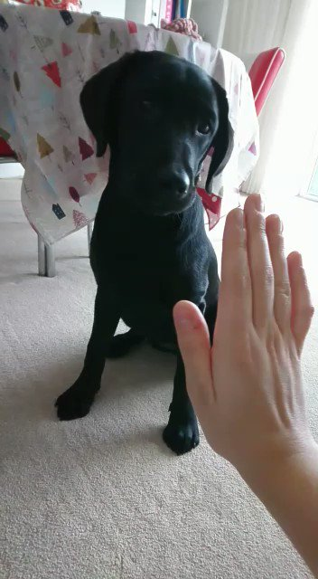 here's ellie doing a high five 🙂