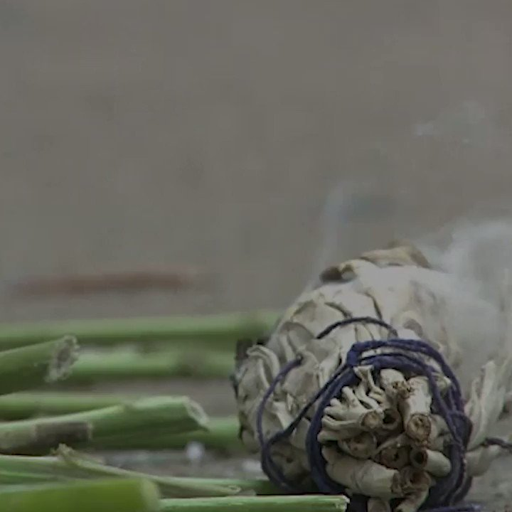 People have been burning sage for centuries now. But why? 🔥