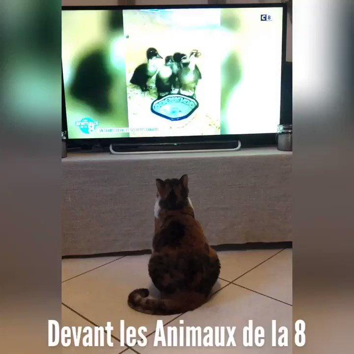 Image for the Tweet beginning: Elle peut rester des heures