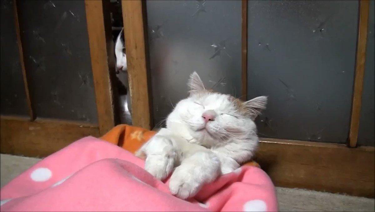 таланту кот который хочет спать гифка вперед, скажу моем