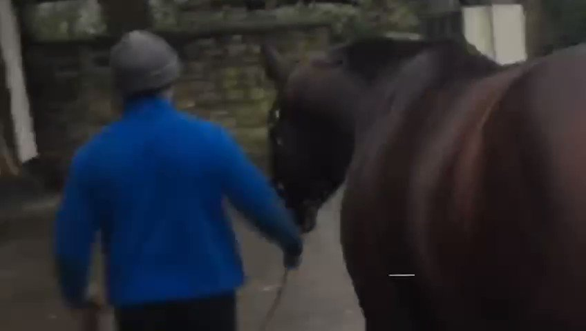 CompasStallions's photo on #IrishStallionTrail