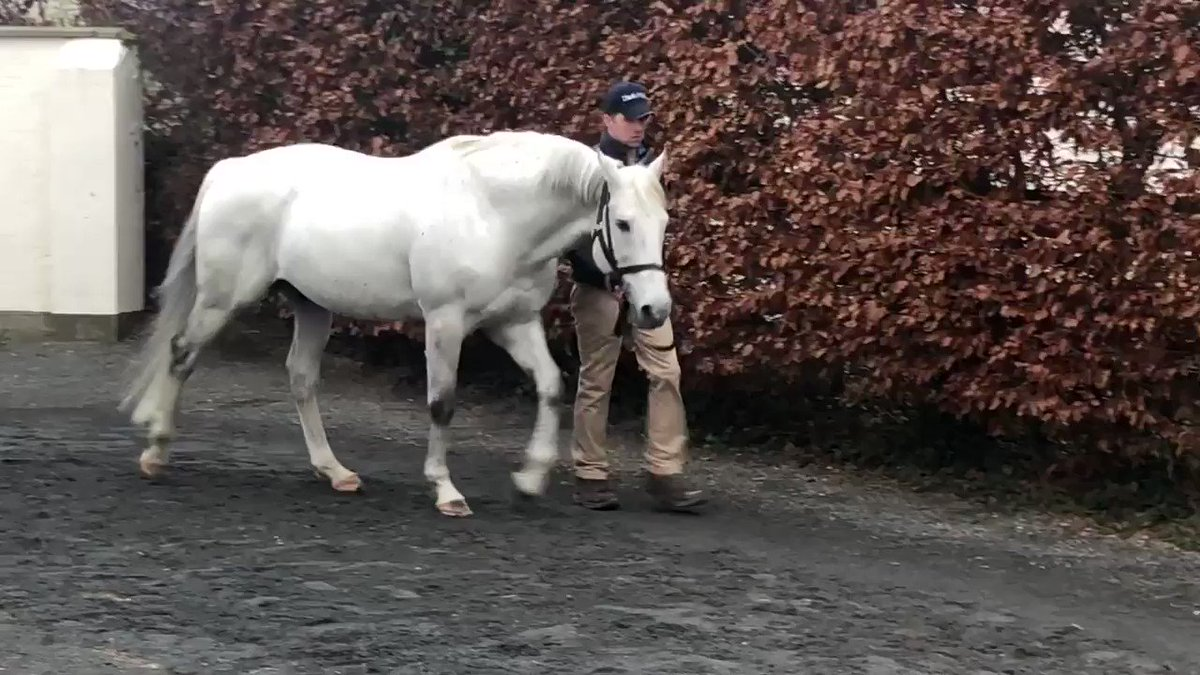 EBN's photo on #IrishStallionTrail