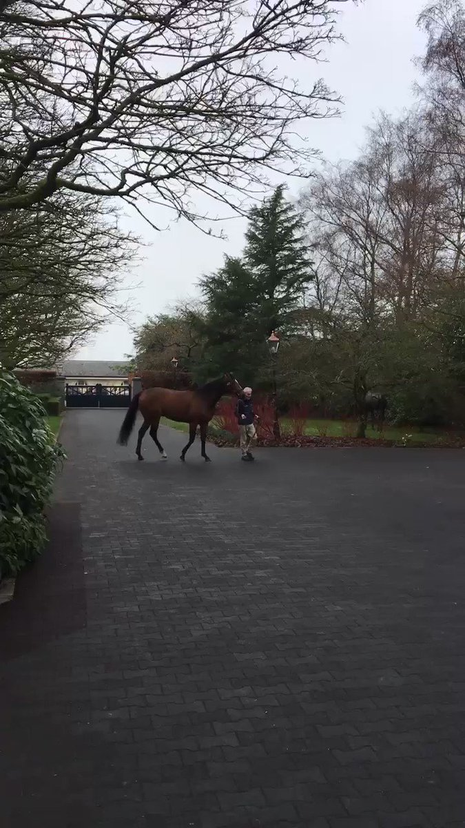Aidan's photo on #IrishStallionTrail