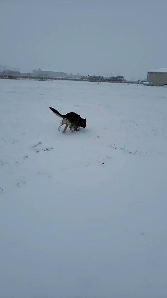 K9 Chal's photo on #snowpocalypse