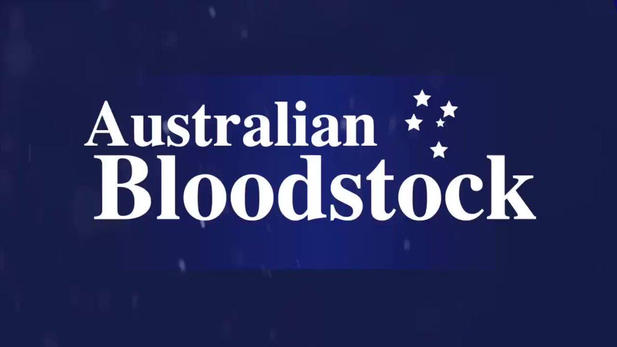 Australian Bloodstock's photo on exhilarates