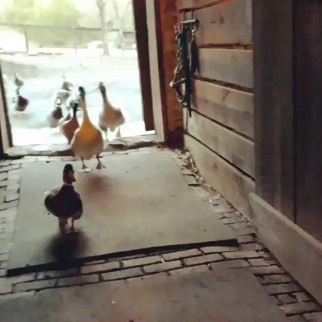 Angie Karan Ⓥ🌱�'s photo on The Ducks