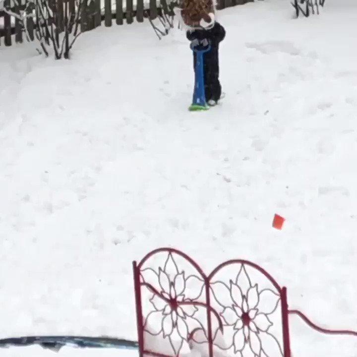 Boys will be boys 🐯🤣 #bob #dc #snowday @nbcwashington