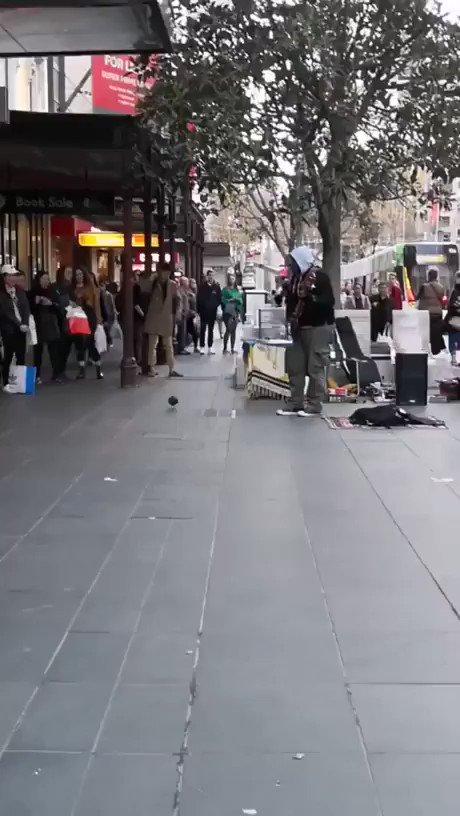 路上ライブで鳩が踊りだしてみんな笑顔になる動画