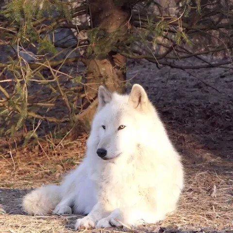 Wolf Conservation Center's photo on #FridayFeeIing