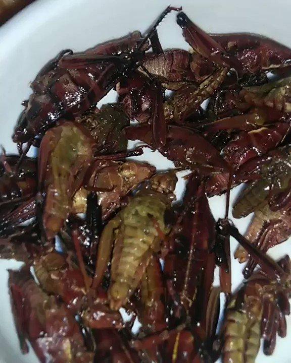 RT @XoximilcoCancun: This is how you eat crickets. Well done compadres! #XoximilcoCancún  (📹 eliasappas) https://t.co/IoDTGfNyYl