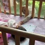 赤ちゃんに「よろしくね」とご挨拶しているねこちゃん!手がなんとも可愛い!