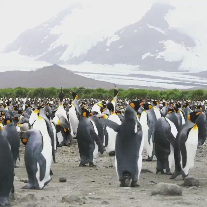 Image for the Tweet beginning: Happy Penguin Awareness Day 🙂🐧🐧