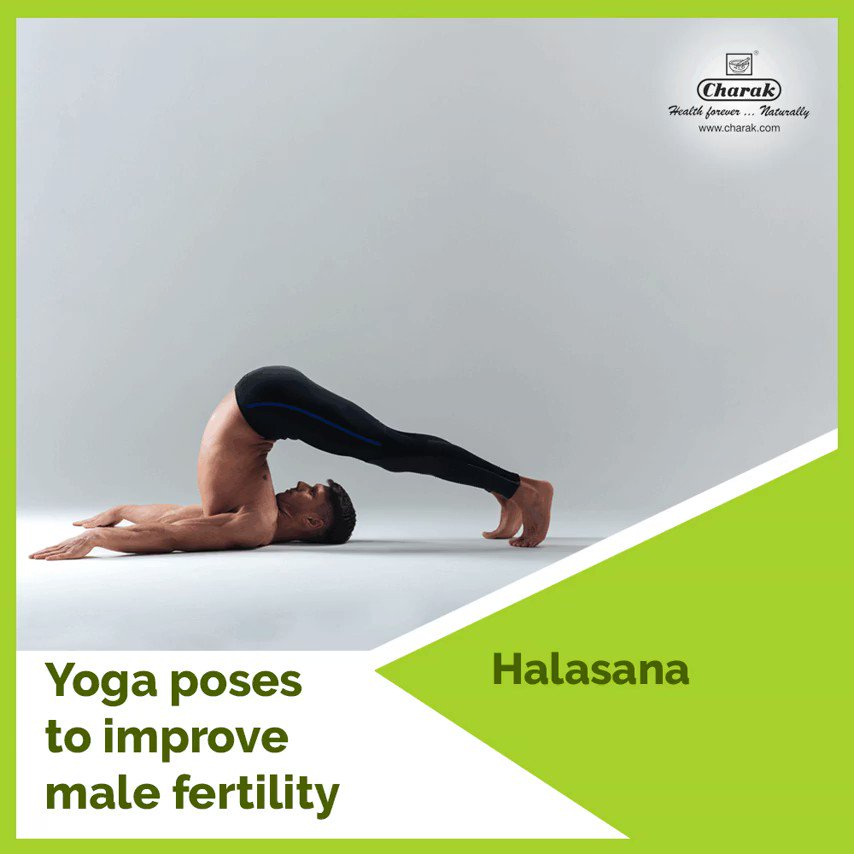 Charak Pharma On Twitter Yoga Asanas Beneficial In Male Infertility Sarvang And Halasana For Good Quality And Quantity Of Sperms Charak Pharma Https T Co Cgv1qncyns Yoga Malefertility Menshealth Life Increasefertility Maleinfertility