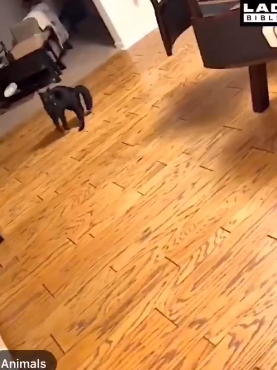 If you have videos of your cat running weird please post under