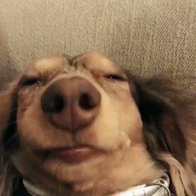 Hello world this is my dog #liluziaoki https://t.co/Vv7xA8hljm