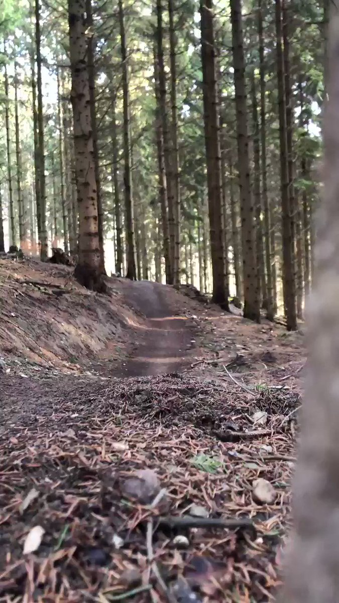 I love this speedy little rollercoaster section on one of my hometrails 🚀👌 Today I had a lot of efforts on my training schedule 😅 After the suffering it was pretty nice to just cruise around for the sake of cruising  @iamspecialized @ROTOR_bike @magura_official @lookcycle