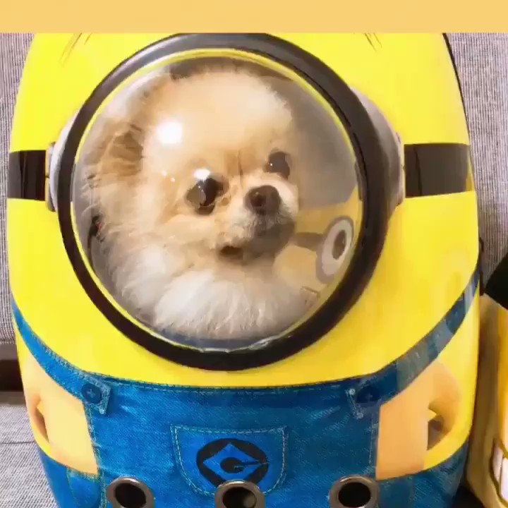 うちの犬の服 Tagged Tweets And Download Twitter Mp4 Videos Twitur