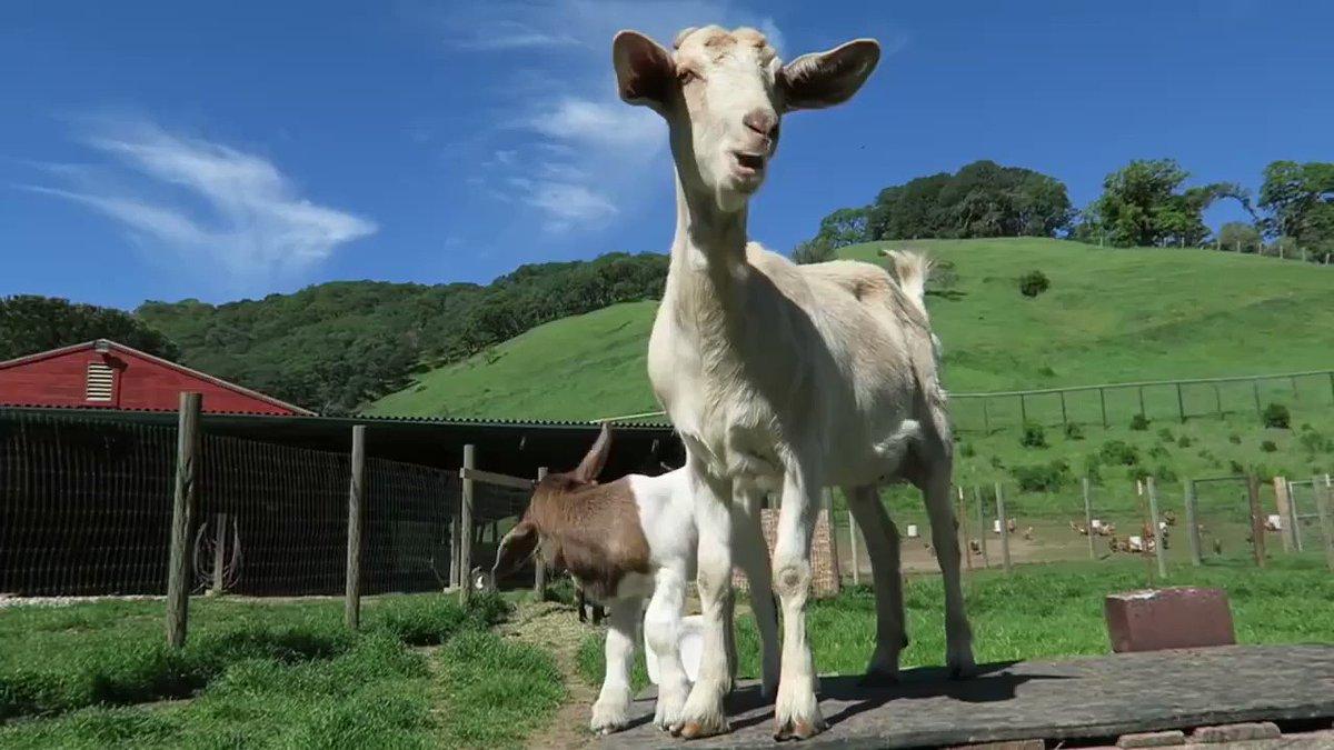 Meet Bella and Butterscotch!