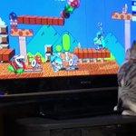 猫を遊ばせるパックンフラワーさん流石です