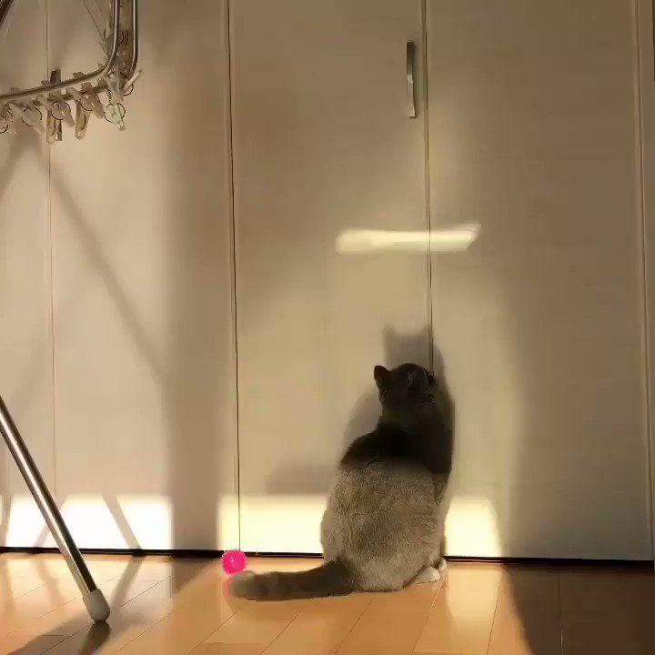 どうしても気になるニャ😽 #猫好きさんと繋がりたい  #ねこ部