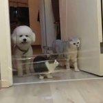 猫は軽々クリア!ラップを飛び越えられずあたふたしちゃう犬が可愛い!