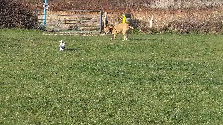 Dogs Trust Shoreham's photo on #NationalMakeAFriendDay