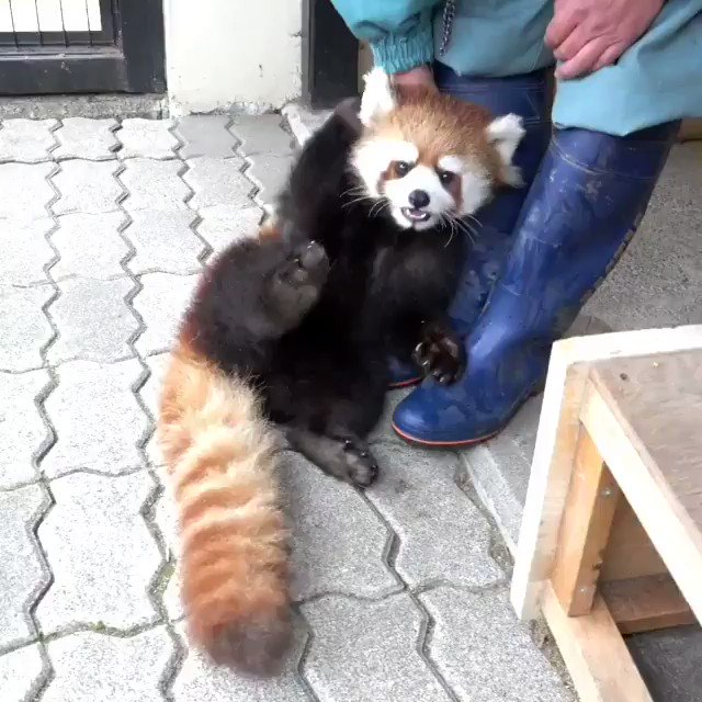 Red Pandas's photo on Felicity