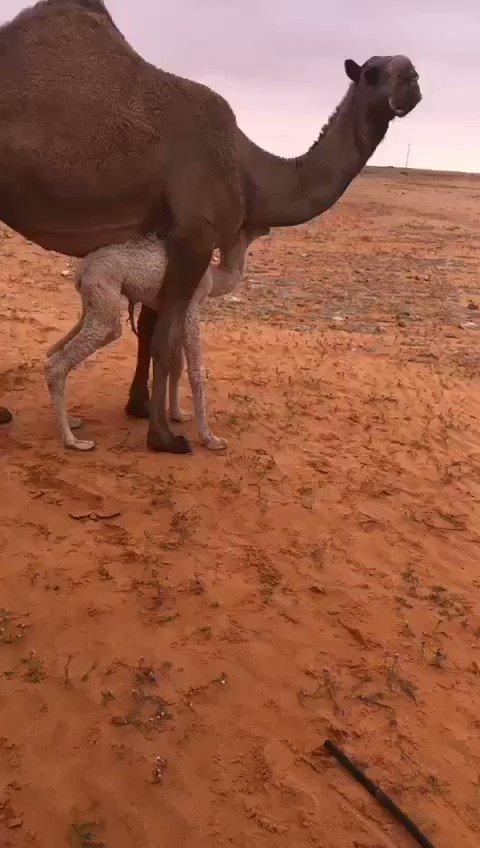 RT @Matr_Ar: أبيات تتوافق مع الفيديو تماماً 👌🏻 #ثلاثه_اشياء_تسعدك https://t.co/N6qEdxVkMK