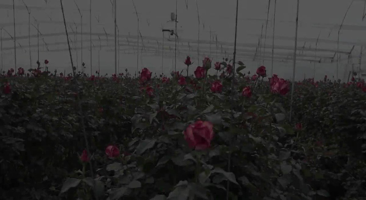 .@UPS Ready To Help Love Bloom Worldwide On Valentine's Day - https://buff.ly/2I7WaUZ  #upsnews