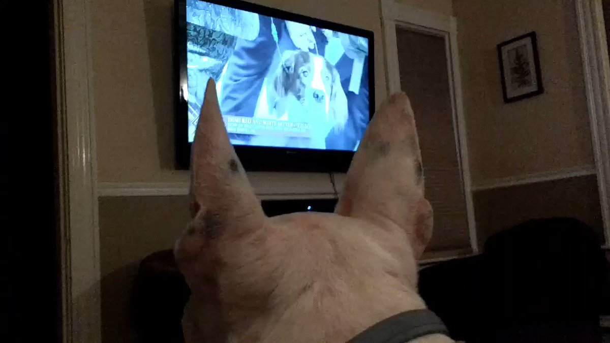 Rex the TV terrier's photo on #WestminsterDogShow