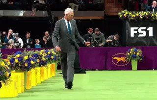 someone cropped the dogs out of the westminster dogs show & it's somehow exponentially better👌🏼  source: https://www.reddit.com/r/gifs/comments/aq9c9l/2019_westminster_dog_show_without_dogs/?st=JS3PCBZD&sh=e8135a89… @WKCDOGS